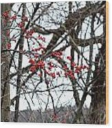 Red Berries White Sky Wood Print