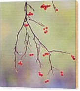 Red Berrries Wood Print
