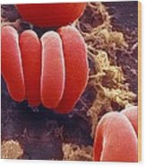 Red Blood Cells, Sem Wood Print by Ami Images