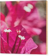 red Bougainvillea Wood Print