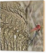 Red-breasted Sapsucker 3 Wood Print