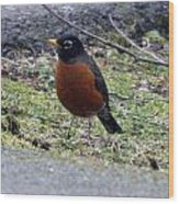 Red Brest Robin - 0001 Wood Print