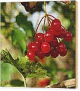 Red Bunch Wood Print by LeeAnn McLaneGoetz McLaneGoetzStudioLLCcom