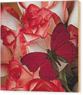 Red Butterfly On Blush Roses Wood Print