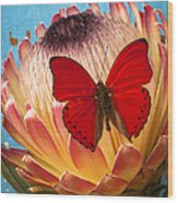 Red Butterfly On Protea Wood Print