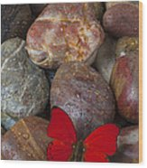 Red Butterfly On Rocks Wood Print