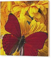 Red Butterfly On Yellow Gerbera Daisies  Wood Print