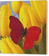 Red Butterful On Yellow Tulips Wood Print