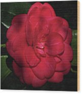 Red Camelia Wood Print
