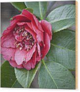 Red Camellia Squared Wood Print