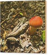Red Caped Mushroom 1 Wood Print