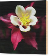 Red Columbine Wood Print