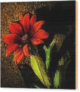 Red Coneflower Wood Print
