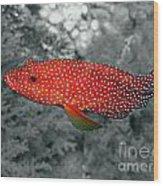 Red Coral Cod Wood Print by Serena Bowles