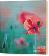Red Corn Poppy Flowers 04 Wood Print
