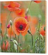 Red Corn Poppy Flowers 05 Wood Print