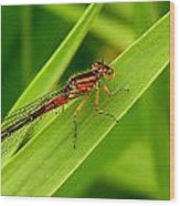 Red Damsel Fly Wood Print