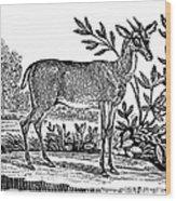 Red Deer Wood Print by Granger