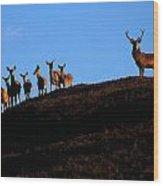 Red Deer Group Wood Print