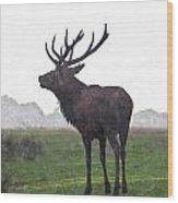 Red Deer Painting Wood Print