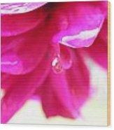 Red Drop Puncak Wood Print