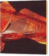Red Drum Fish  Wood Print by Douglas Snider