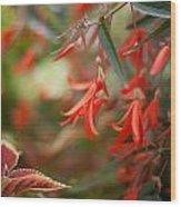 Red Exotic Wood Print