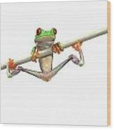Red-eyed Tree Frog Agalychnis Callidryas Wood Print