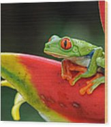Red-eyed Tree Frog Wood Print