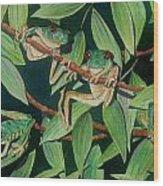 Red Eyed Tree Frogs IIi Wood Print