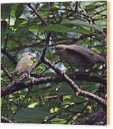 Red-eyed Vireo Feeding Cowbird Fledgling Wood Print