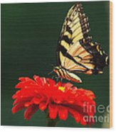 Red Flower And Butterfly Wood Print