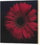 Red Flower Wood Print by Ron Smith