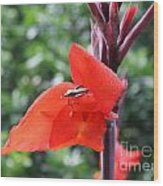 Red Flower With Bug Wood Print