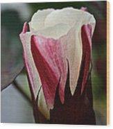 Red Foliated White Wood Print
