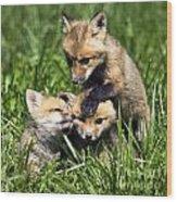 Red Fox Babies - D006647 Wood Print