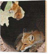 Red Fox Dreaming Wood Print
