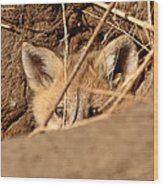 Red Fox Pup Peaking Out Of Den Wood Print
