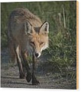 Red Fox Walking Wood Print