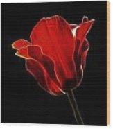 Red Fractal Tulip Wood Print