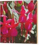 Red Fuchsias Wood Print