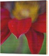 Red Gerber 3 Wood Print