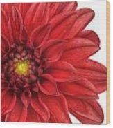 Red Gerber Wood Print by Al Hurley