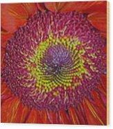 Red Gerber Daisy Wood Print