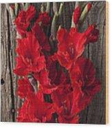 Red Gladiolus Wood Print