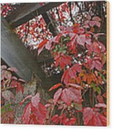 Red Grape Leaves And Beams Wood Print