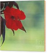 Red Hanging Plant Wood Print