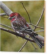 Red Head Black Tail Wood Print