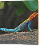 Red-headed Agama Wood Print