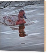 Red Headed Duck Wood Print